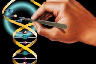 Генная терапия победила гемофилию
