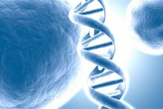 Найден ген, позволяющий восстанавливать ткани организма также быстро, как и в юности