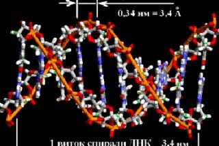Геном человека теперь можно редактировать безопасно
