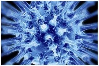 Вызывающий простуду вирус рассекречен