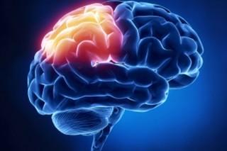 Эстрогены не дают мозгу стареть