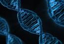 Создан первый комплексный Атлас схем деятельности генов человека