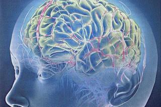 Стресс меняет размер головного мозга