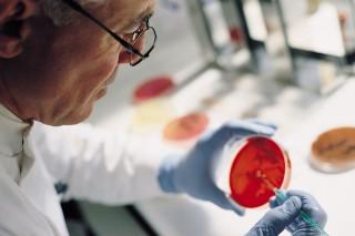 Древние вирусы до сих пор корректируют развитие эмбриональных клеток
