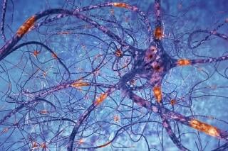 Ученые обнаружили возможную причину болезни Паркинсона