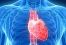 Ученые создадут живое сердце при помощи 3D-принтера