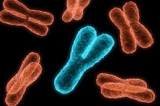 Гены Y-хромосомы помогают выживать мужскому роду