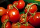 Новое исследование должно прояснить роль помидоров в мужском бесплодии