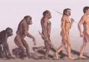 Новое открытие ученых: прямохождение помогло человеку развить умственные способности