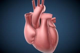 Анализ крови заменит биопсию после пересадки сердца